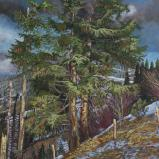 Bernard Bailly, Sapins au Gantrisch, hiver 2011,Peinture acrylique sur toile, 146 x 114 cm