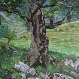 Bernard Bailly, Érable de montagne à La Brecca, 2012, Peinture acrylique sur toile 146 x 114
